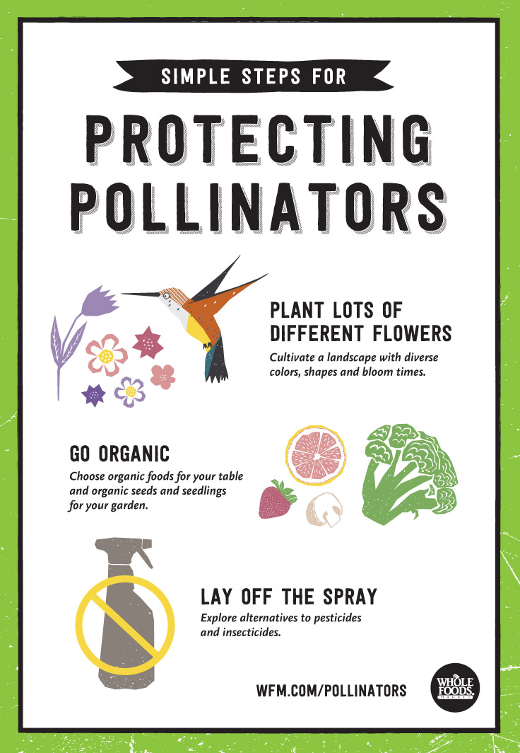 Simple Steps for Protecting Pollinators | WholeFoodsMarket.com