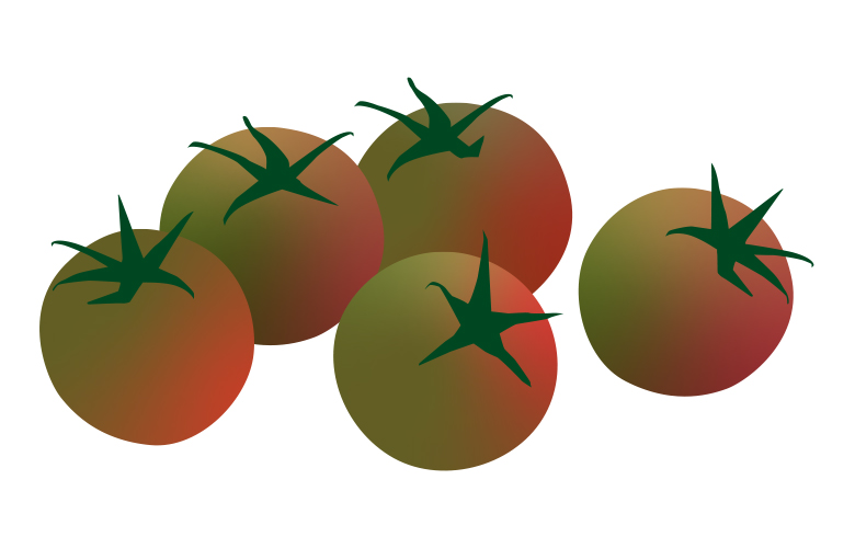 Black Cherry Tomato illustration