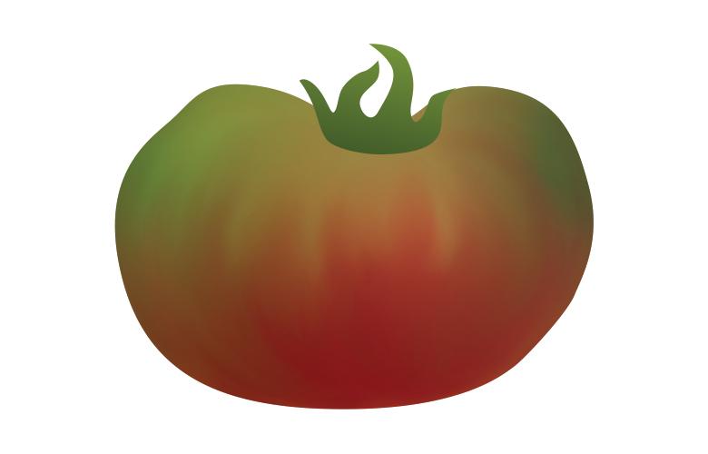 Cherokee Purple Tomato illustration