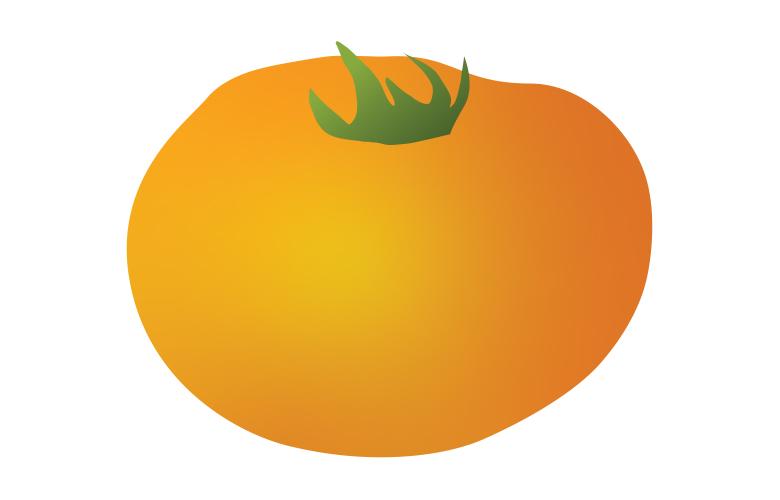 Orange Persimmon illustration