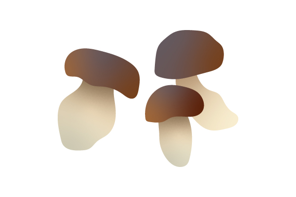Porcini Illustration